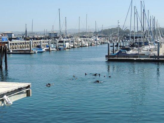 Crab Louie's Bistro: Monterey Bay sea lions