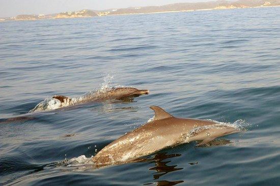 Dreams Huatulco Resort & Spa: Dolphins with Tony