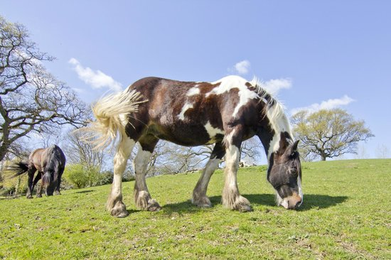 Godshill Park Farm House: Large variety of animals can be seen from the property