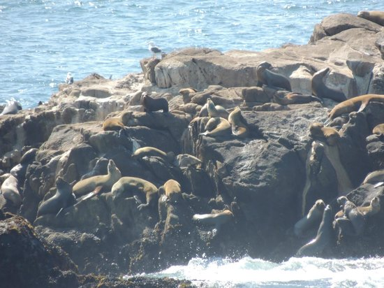 Point Lobos: Sea lions on rocks