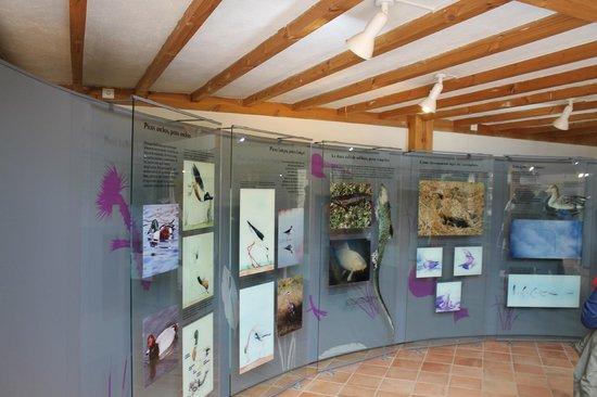 Reserva Natural de las Lagunas de Villafafila: Información y exposiciones que se encuentran en la Casa del Parque.