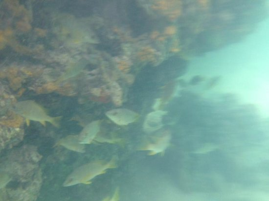Coralina Island: Snorkling in front of hotel