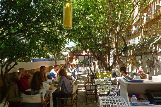 Cafe 7: Cafe7 in spring
