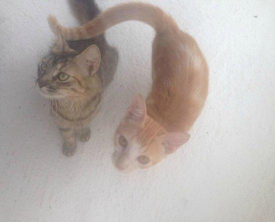 Coralina Island: Gatitos preciosos!