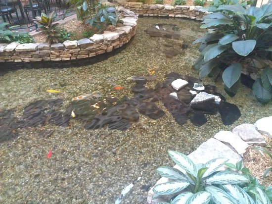 Embassy Suites by Hilton Greenville Golf Resort & Conference Center: Koi pond inside
