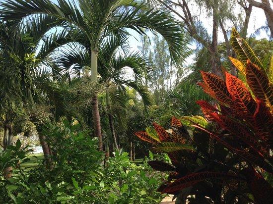 Club Med La Pointe aux Canonniers : les jardins