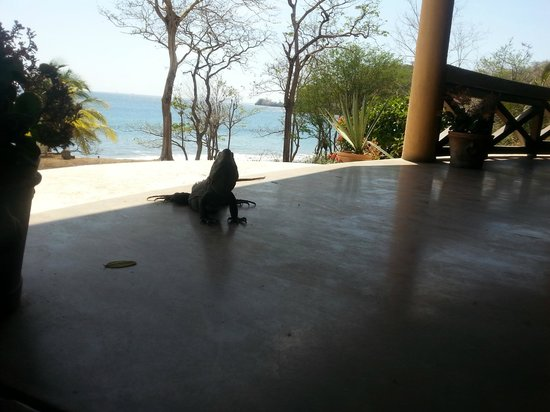 Sugar Beach Hotel: A visitor for lunch time.