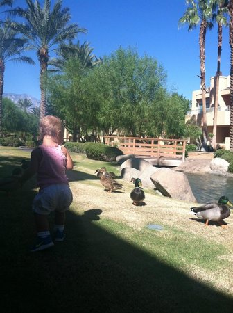 Westin Mission Hills Golf Resort & Spa: The ducks provided entertainment to our daughter
