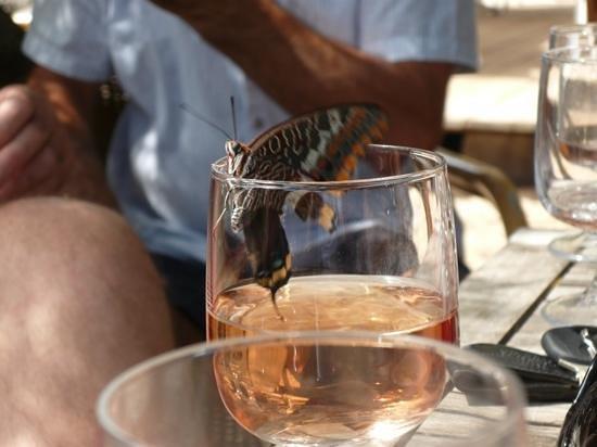 Hotel du Golfe : papillon oenologue