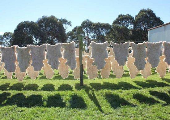 Classic Sheepskin Tannery