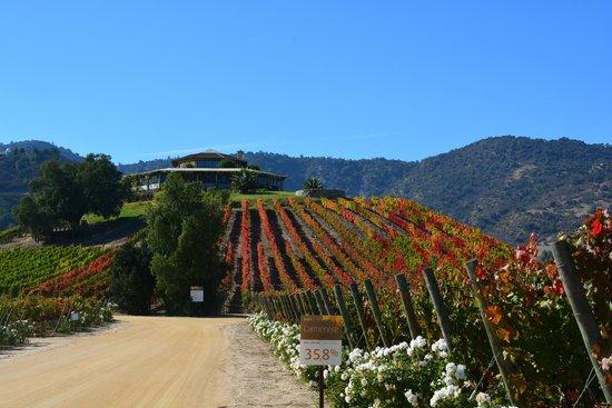 Vina Santa Cruz: Chegando à vinícula