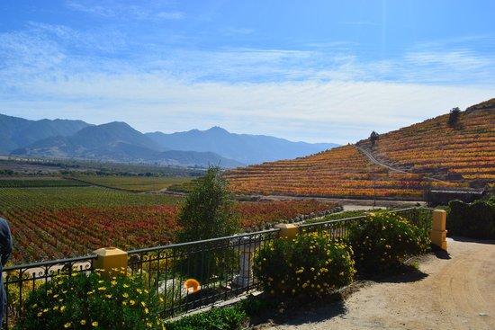 Vina Santa Cruz: vinhedos