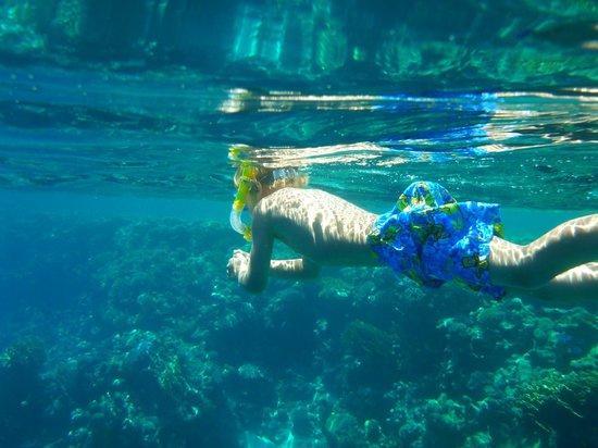 Savoy Sharm El Sheikh: snorkeling