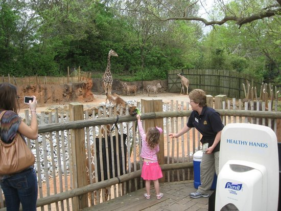 Zoo Atlanta : Feed the giraffes for a modest fee