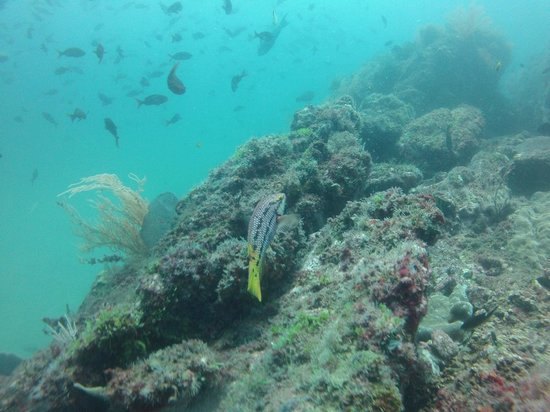 Mad About Diving: A small sample of fish to see...