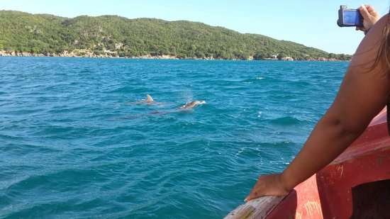 Pelican Bar : Dolphins swam alongside our boat