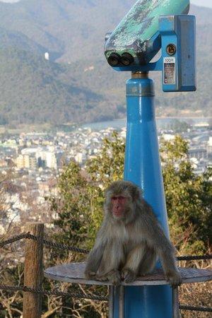 Futterhaus - Picture of Monkey Park Iwatayama, Kyoto - TripAdvisor