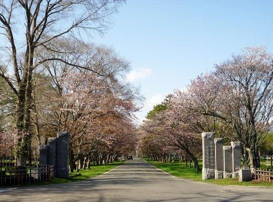 JRA Hidaka Ikusei Ranch