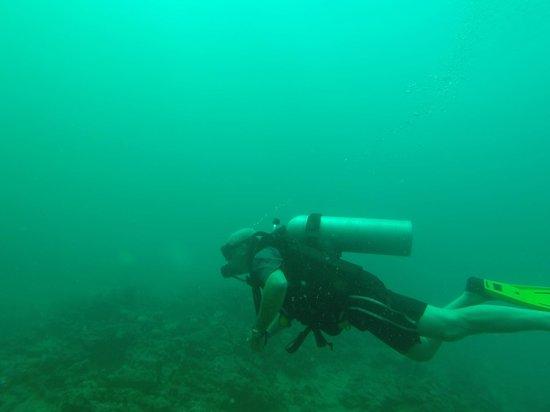 Bocas Dive Center: en pleno disfrute
