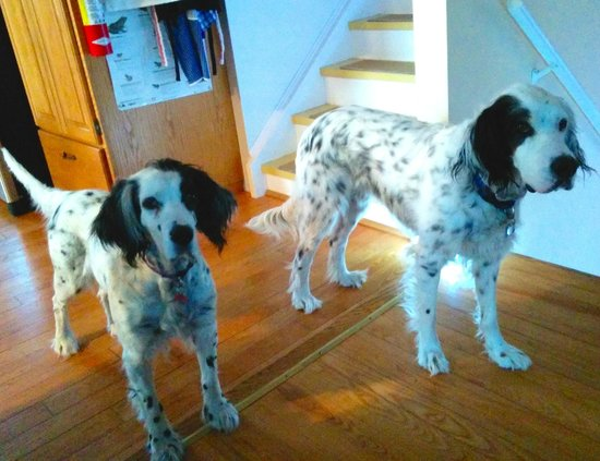 Taylor-Made B&B: Lola and Cooper are lovable, well-behaved dogs who add to the fun.