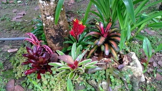 Hotel Escape Caribeno : hermosas bromelias