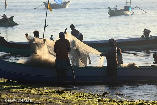 The Dorsal Effect: Fishermen check nets after a night on the Ocean