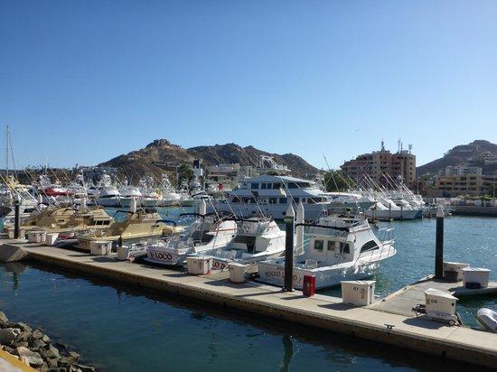 Marina Cabo San Lucas : Cabo San Lucas Marina