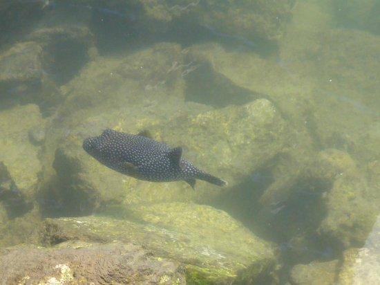 Marina Cabo San Lucas : fish swimming in Marina