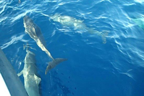 Park Hyatt Maldives Hadahaa : Dolphin watching with hundreds of dolphins!
