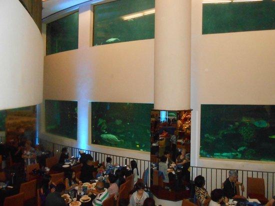 Alohilani Resort Waikiki Beach: Oceanarium Restaurant