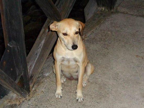 Grand Paradise Playa Dorada : Honey - the resort dog!