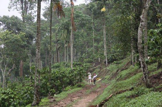 Tranquil Resort: Braveheart Trail