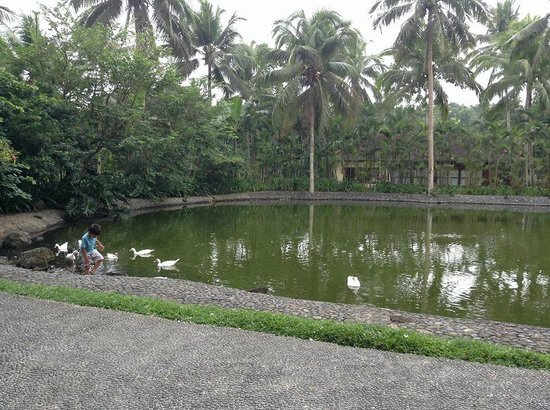 The Farm at San Benito : outside the restaurant, pond