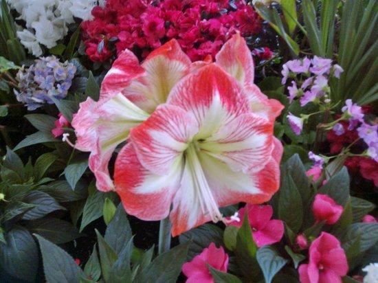 Pavilion Gardens: Indoor garden