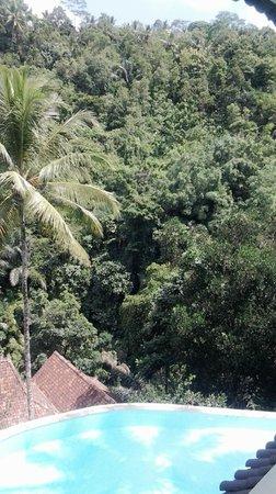 Ayung Resort Ubud: Ayung River valley view