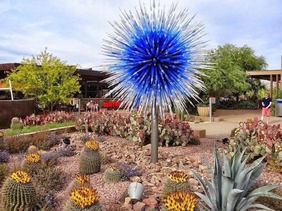 Chihuly Sculpture Yucca Desert Towers Picture Of Desert Botanical Garden Phoenix Tripadvisor