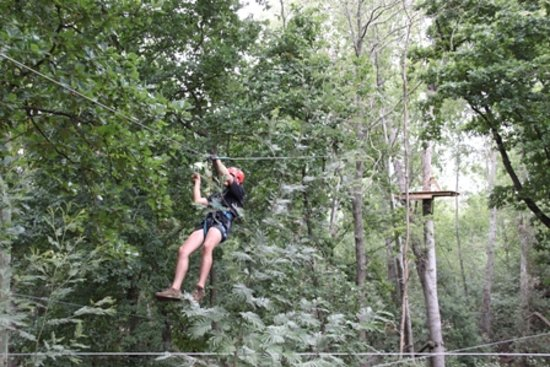 SA Forest Adventures: Sliding from Platform to Platform