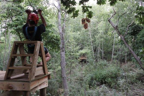 SA Forest Adventures : Zipline fun
