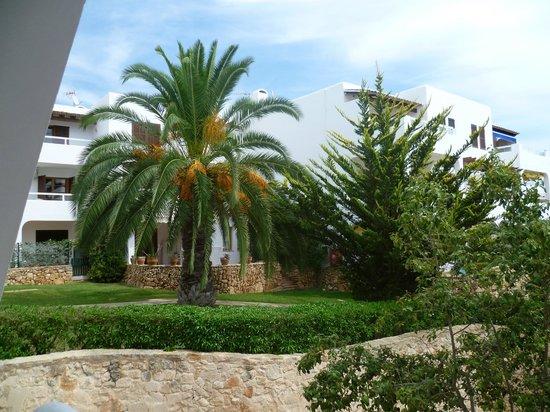 Palia Puerto Del Sol: vue sur les chambres donnant sur le jardin