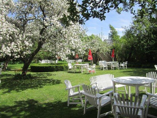 Ystad Animal Park: Ta en fika i vår underbara äppelträdgård. Vi har servering av både varm och kall mat, glass m.m.