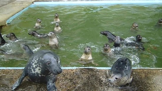 Cornish Seal Sanctuary: Ray and friends