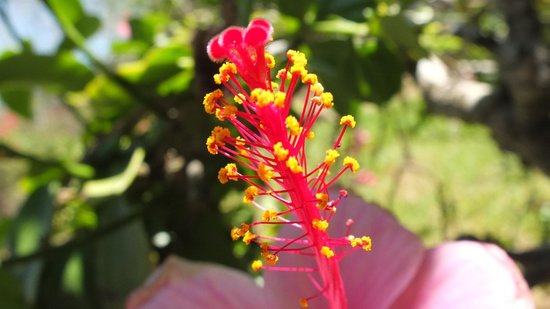Sand Island Beach Cottages : beautiful flowers
