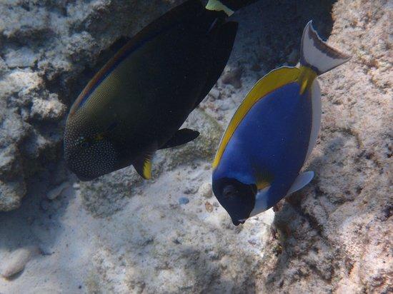 Similan Islands: 海の中