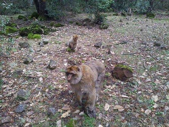 Fes Desert Tours: Monkeys forest:)