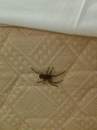 Bolero Park Apartments : araña en el colchón de la cama