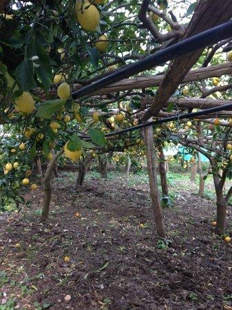 Il Cavaliere dei Conti : Lemons, lemons, lemons!