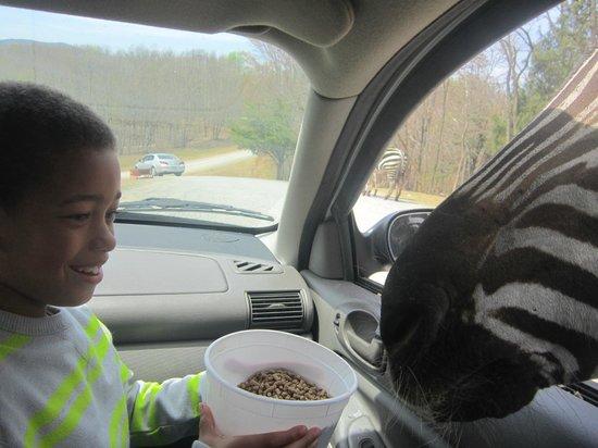 Virginia Safari Park: Son enjoyed himself