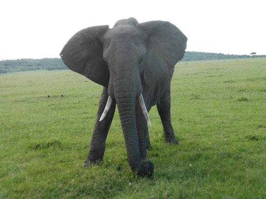 Mahali Mzuri - Sir Richard Branson's Kenyan Safari Camp: Elephant