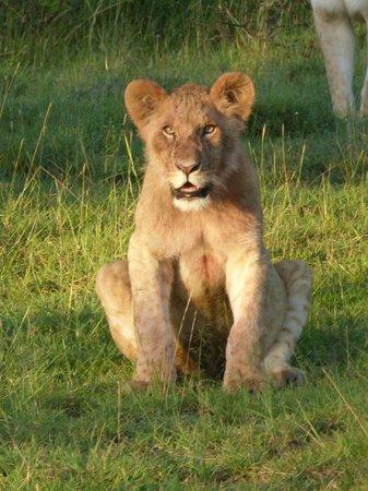 Mahali Mzuri - Sir Richard Branson's Kenyan Safari Camp: Young cub
