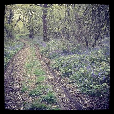 Nearby bluebell woods